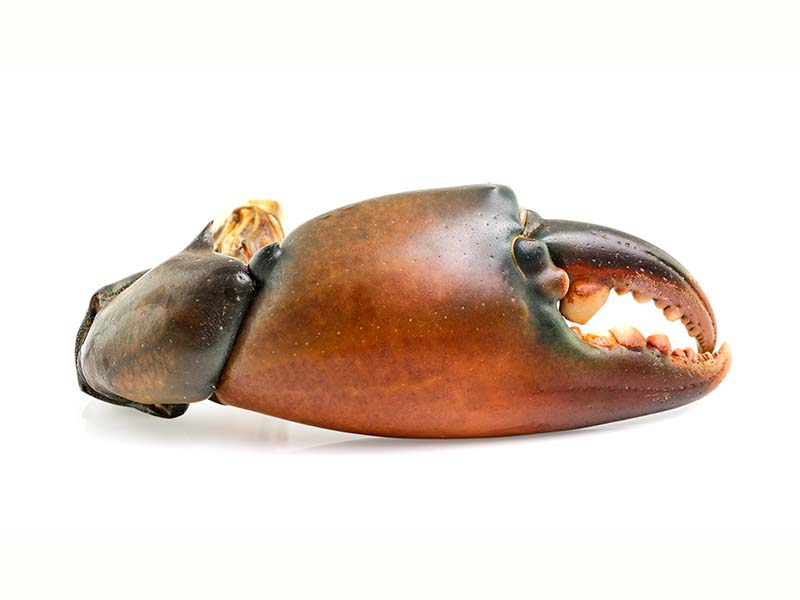 Crab Claws 2 a