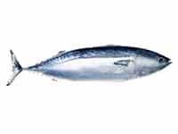 Tuna 2 b