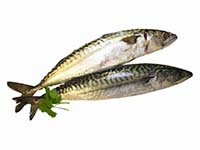 Mackerel 1 b