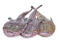 Monkfish 1 b